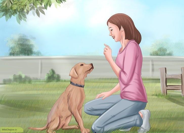 چگونه میتوانیم یک پرستار خوب برای حیوان خانگی خود باشیم؟