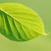 چگونه عوامل متعددی بر رشد و نمو گیاهان تاثیر می گذارند؟