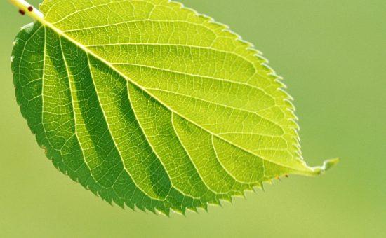 چگونه خاک و نور بر رشد گیاه تاثیر می گذارد؟