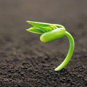 چگونه گیاهان تکثیر می شوند؟