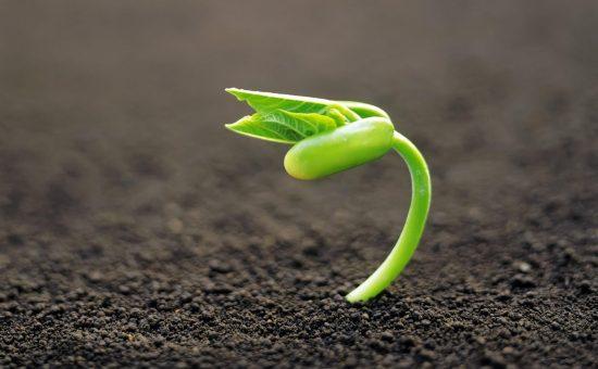 چگونه به حاصل خیزی خاک پی ببریم؟