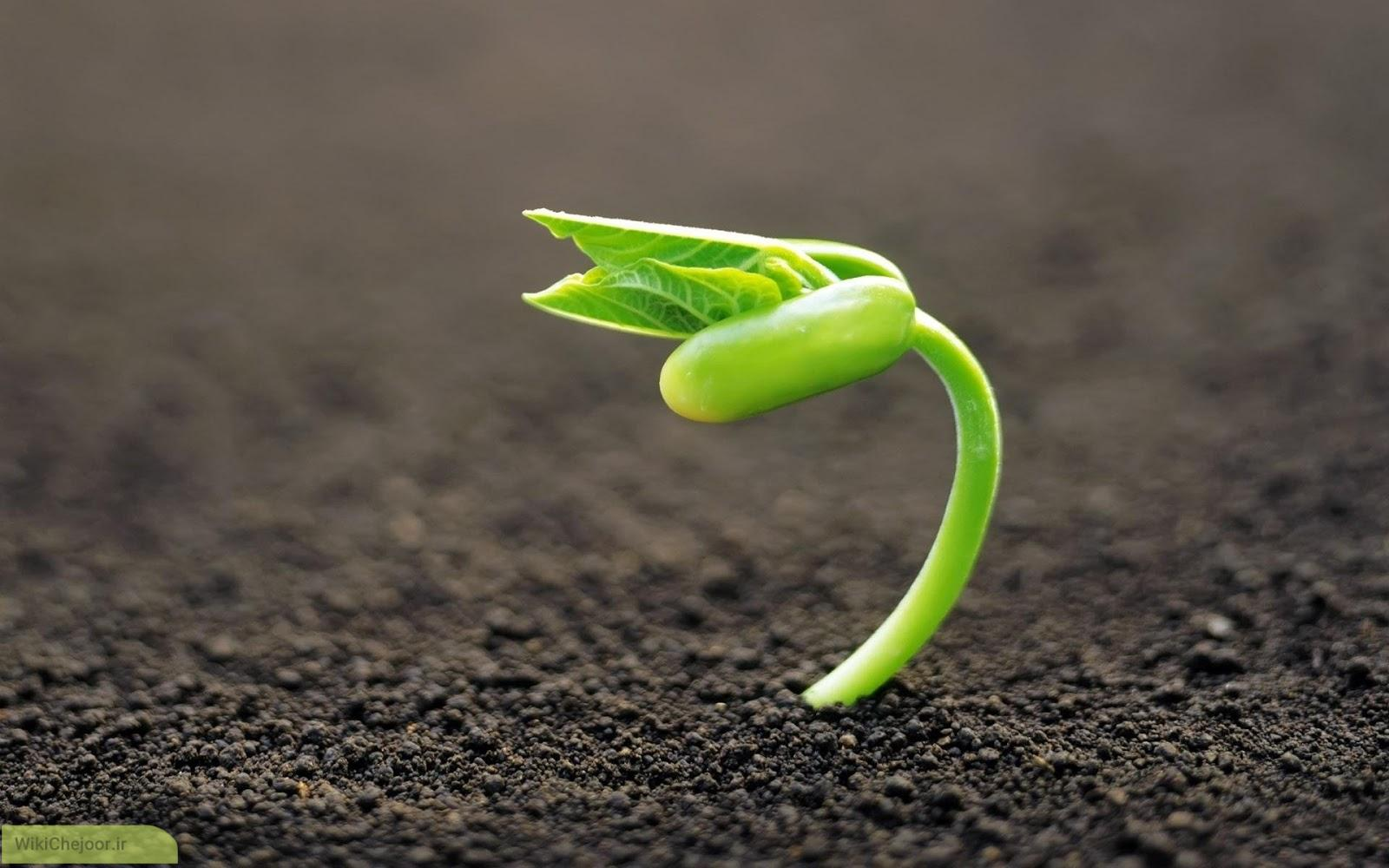 چگونه آب و هوا بر رشد گیاه تاثیر می گذارد؟