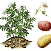 چگونه یک گیاه رشد و نمو می کند؟