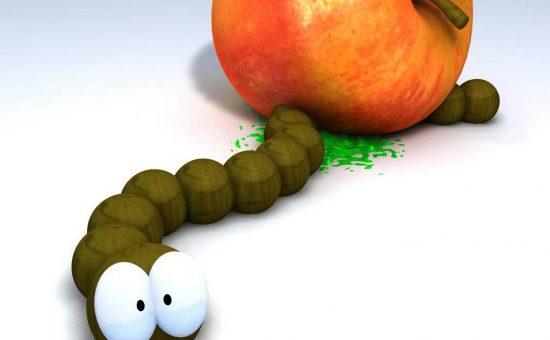 چگونه آفات درخت سیب را از بین ببریم؟
