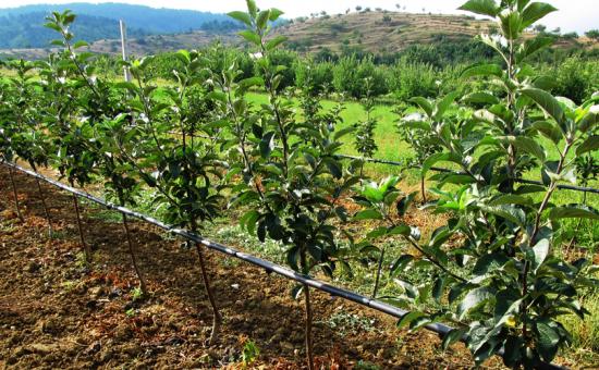 چگونه مزارع خود را آبیاری کنیم؟