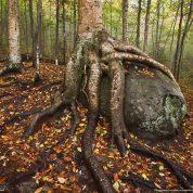 چگونه با انواع ریشه در گیاهان و کارکرد آن آشنا شویم؟