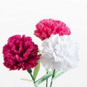 چگونه گل میخک درست کنیم؟