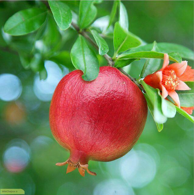 راه های تشخیص انار قرمز و شیرین