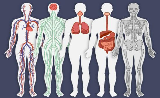 چگونه کارکرد سیستم های بدن را بدانیم؟