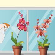 چگونه از گل ارکیده مراقبت کنیم؟