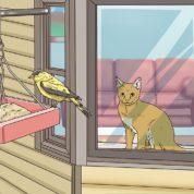 چگونه از حیوانات  کوچک حیاط در مقابل گربه ها محافظت کنیم؟