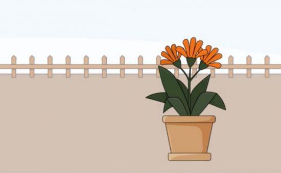 چگونه گل و گیاه پرورش دهیم؟