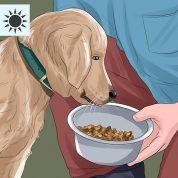 چگونه یک صاحب حیوان خانگی خوب باشیم؟