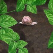 چگونه از حلزون های باغچه مراقبت کنیم؟