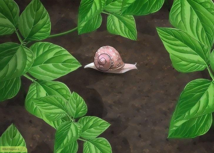 حلزون های باغچه | چگونه از حلزون های باغچه مراقبت کنیم؟