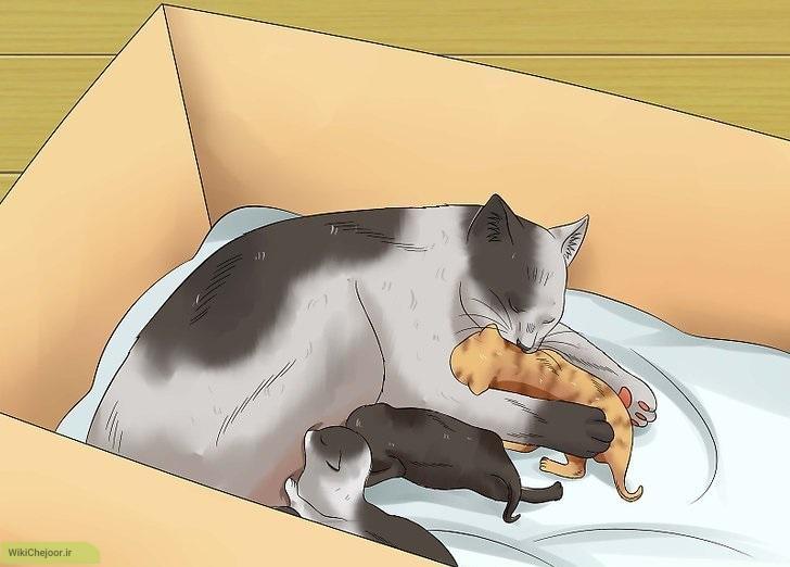 پرورش بچه گربه های تازه متولد شده