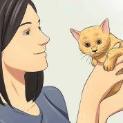 چگونه از یک بچه گربه بعد از تولد مراقبت کنیم؟