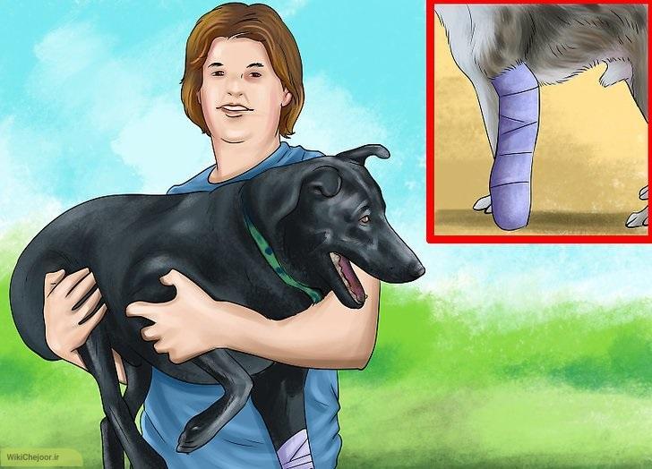 نحوه جابه جایی سگ های مجروح