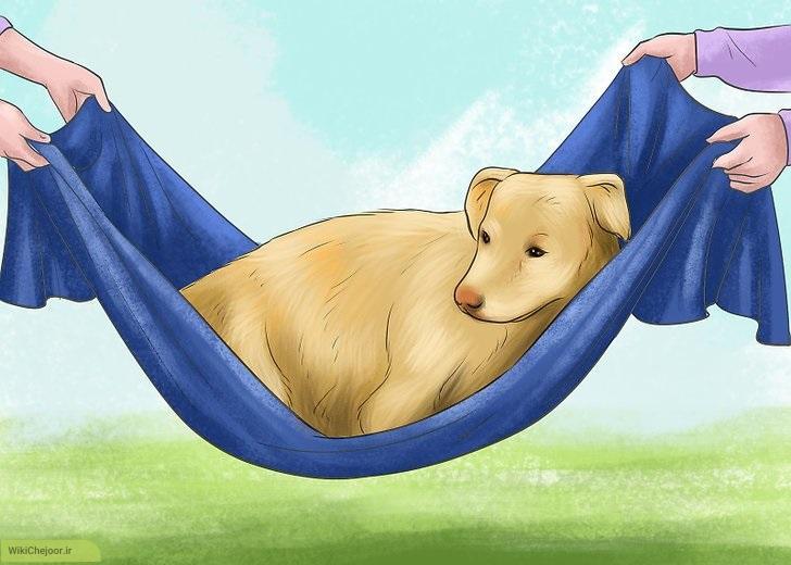 حمل سگ به صورت امن
