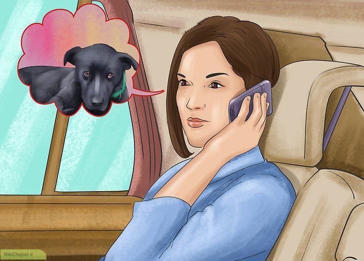 بردن سگ به دامپزشک