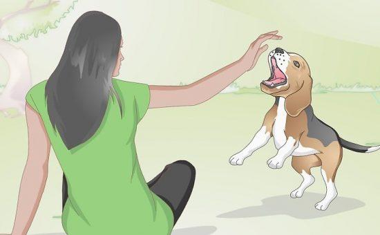 چگونه یک سگ را آرام کنیم؟