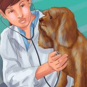 چگونه یک دامپزشک مناسب برای سگ خود پیدا کنید