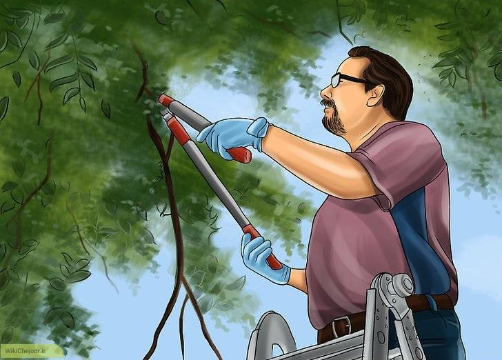 هرس کردن درختان