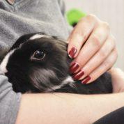 چگونه از یک خرگوش در خانه نگهداری کنیم؟