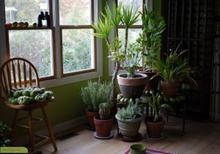 چگونه می توان از گیاهان خانگی خود درمقابل حیوانات محافظت کرد؟