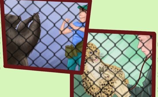 چگونه با حیوانات در یک باغ وحش کار کنیم؟