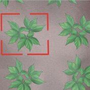 چگونه گیاه جینسنگ را رشد دهیم ؟