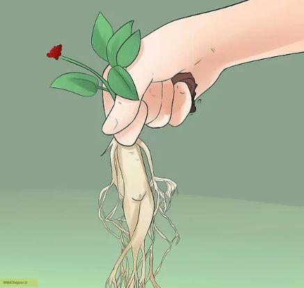 مراقبت از گیاهان و برداشت