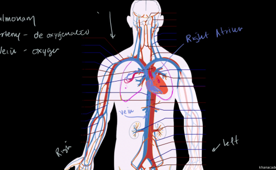 چگونه با اناتومی و فیزیولوژی بدن انسان اشنا شویم؟