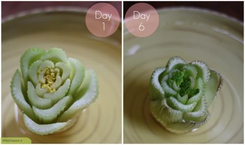 مراحل کاشت کرفس در خانه