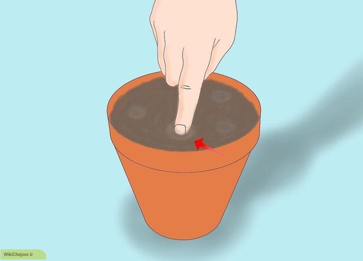 روش اول : پرورش لیموترش از طریق دانه در خاک