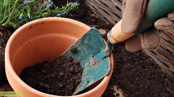 راه های عمومی در خصوص مراقبت از گل و گیاه در تابستان: