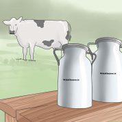 چگونه در باغ خود یک گاو اهلی نگهداری کنیم؟