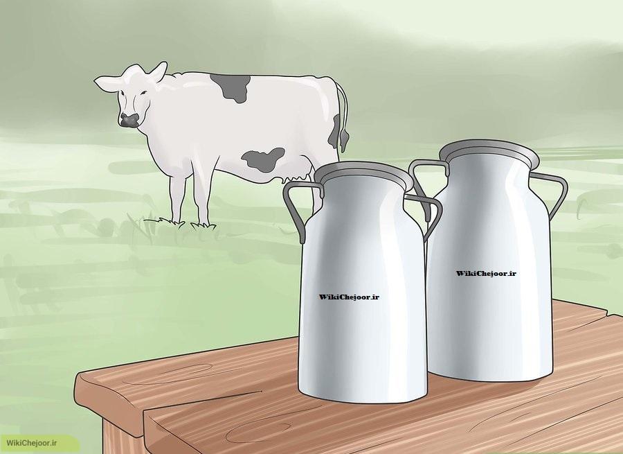 نگهداری گاو | چگونه در باغ خود یک گاو اهلی نگهداری کنیم؟