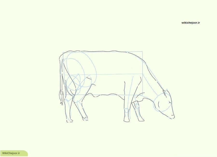 ترسیم یک گاو واقعی در حال چرا
