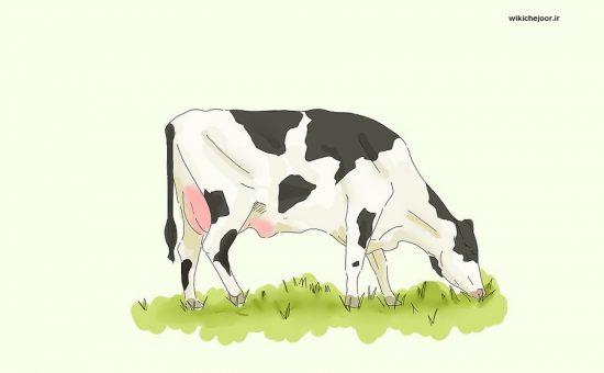 چگونه یک گاو رسم کنیم؟