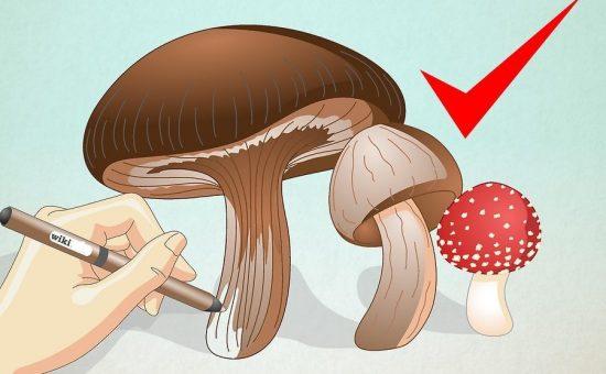 چگونه یک قارچ رسم کنیم؟