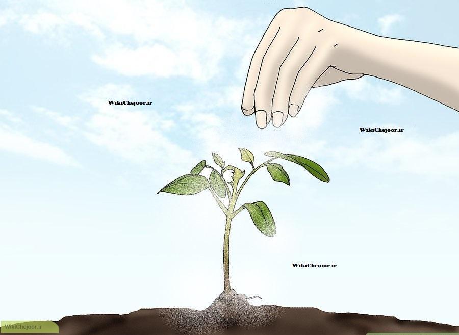 نحوه کاشت درخت