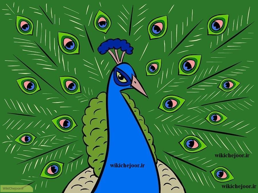 رسم طاووس کارتونی