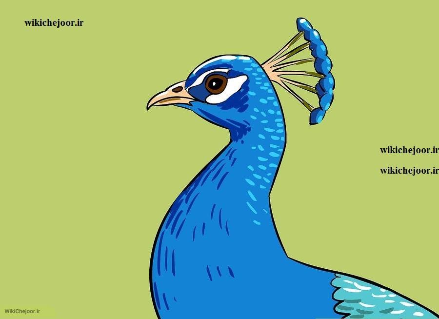 نقاشی طاووس از نمای پهلو