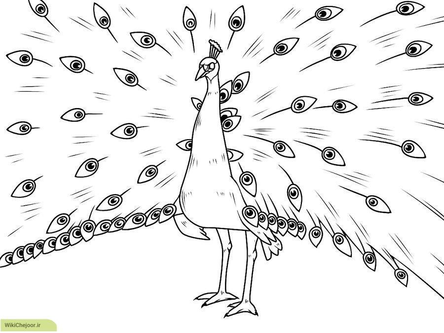 نقاشی طاووس با پرهای باز شده