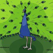 چگونه یک طاووس رسم کنیم؟