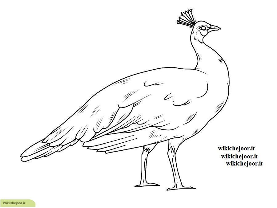 نقاشی طاووس ماده