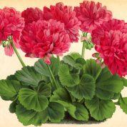چگونه از گل و گیاه خود در تابستان مراقبت کنیم؟