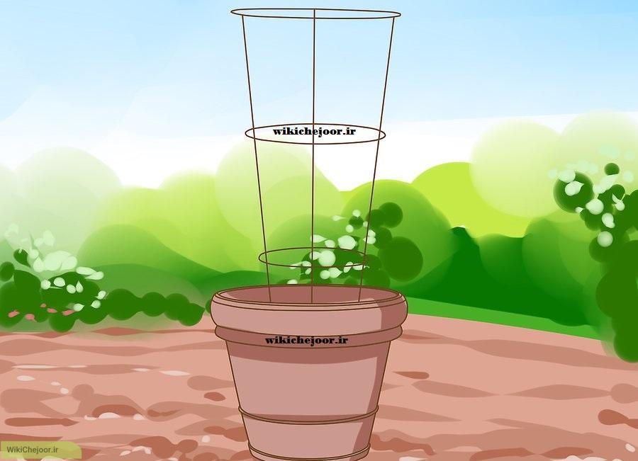 پرورش گوجه فرنگی گیلاسی