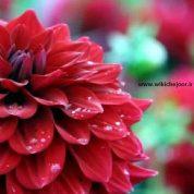 چگونه گل نمدی کوکب و ادریسی زیبایی درست کنیم؟